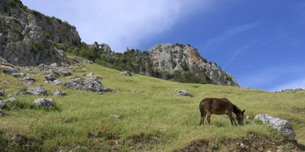 Zuheros – Luque – Zuheros ( 5 km)