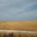 Day 7: Ecija-Marchena, 48 km